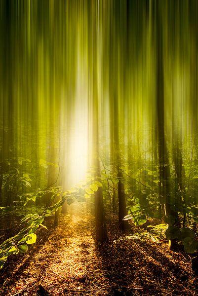 Abstract bos van Martijn Kort