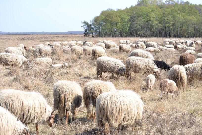 Sheep von Simone van der Heide