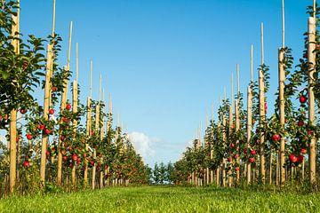 Foto van een appelboomgaard laag bij de grond genomen van Natascha Teubl
