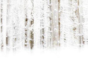 Winter Wonderland in de Hoge Venen van