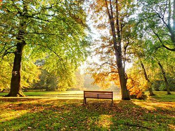 Eenzaam bankje in goudkleurig herfstpark van