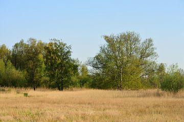 Landschap in de zon van Gerard de Zwaan