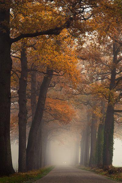 Herfst kleuren bij de oude eiken laan van Edwin Mooijaart