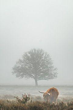 Schottischer Highlander im Nebel von Niels Barto