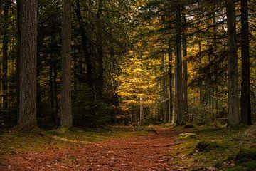 Herbst auf dem Hondsrug von P Kuipers