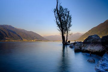 Lago Maggiore, See, Landschaft, Berge, Baum von Lidewij Olive