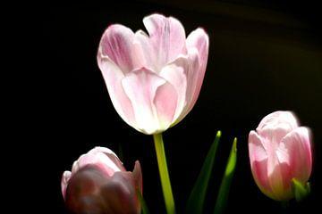 Tulpen von Marianna Pobedimova