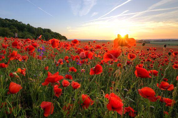 Poppys Sun van Steffen Gierok