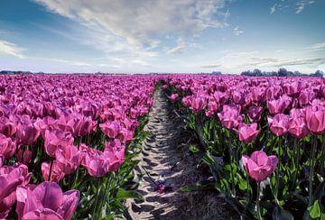 Tulip field van
