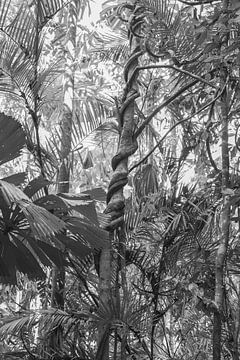 Battle of the Rainforest van DsDuppenPhotography