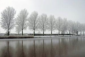 winters bomenlijn aan waterkant