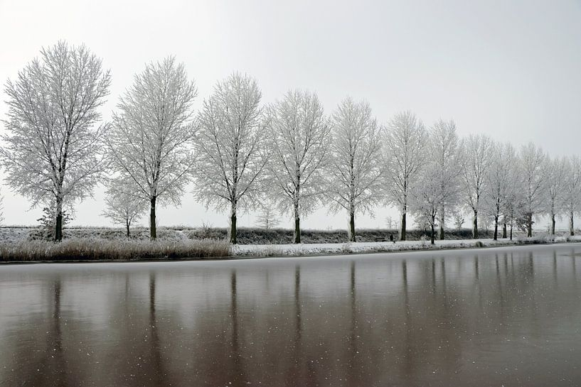 winters bomenlijn aan waterkant van Martin Albers Photography