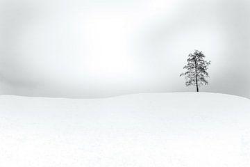 Erlenbaum im Winter von Marijke van Loon