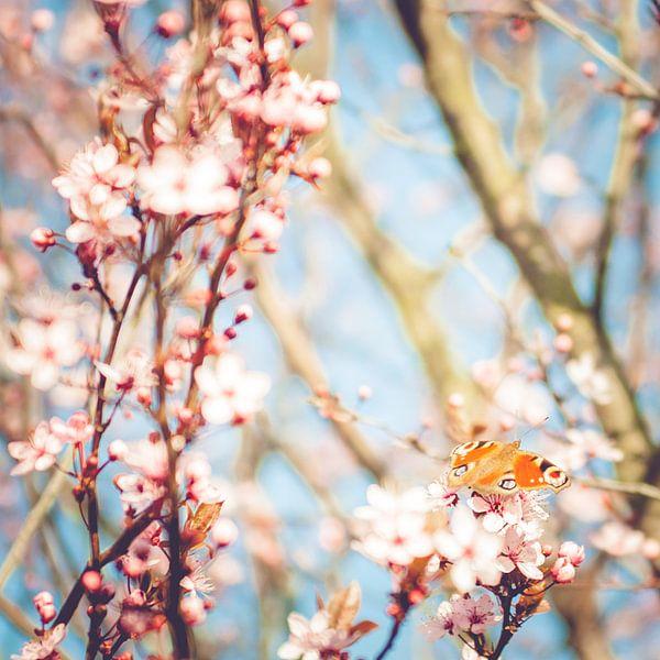 VoorjaarsVlinder van Foto NVS