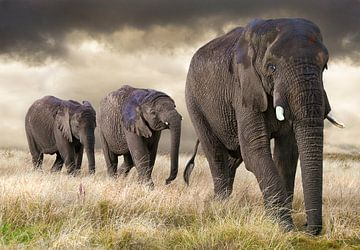 Elefanten Parade von Marcel van Balken