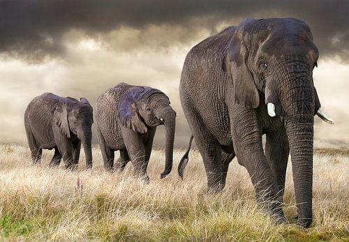 Éléphants  sur Marcel van Balken