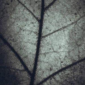 Plattegrond van een eikenblad