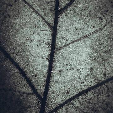 Plattegrond van een eikenblad van Fotografie Jeronimo
