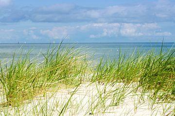 Schilfgraeser am Strand von Tanja Riedel