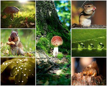 herfst collage 3 van Marja Hoebe