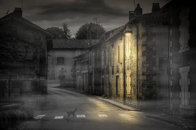De dorpskat van Harry van Rhoon