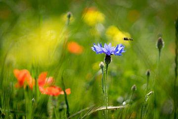 Over de bloemen en bijtjes