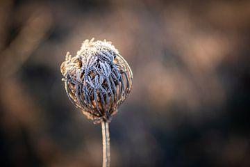 Winterrijp van Danique van Gurp