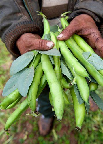 groenten0477