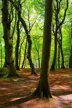 Im Maiwald von Ostsee Bilder