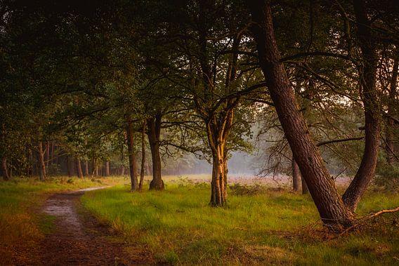 Bos en heide in gouden licht