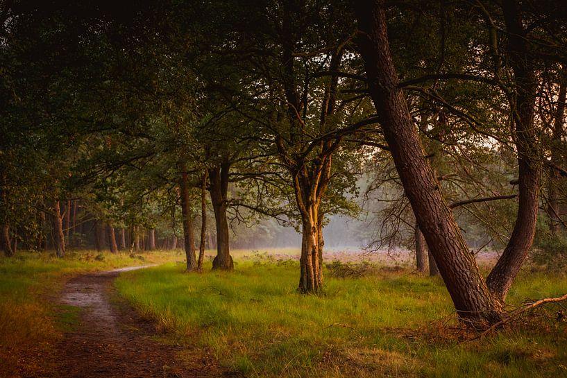 Bos en heide in gouden licht van Gerrit Veldman