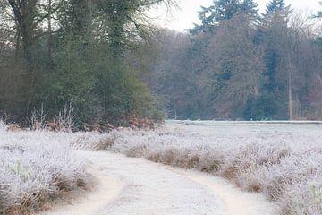 wandelen in de kou van Tania Perneel