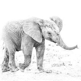 Junger Elefant von Robert Styppa