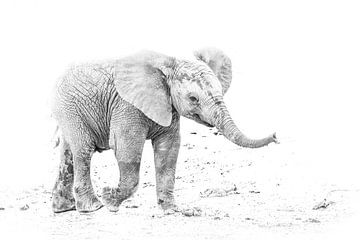 Jonge Olifant van Robert Styppa
