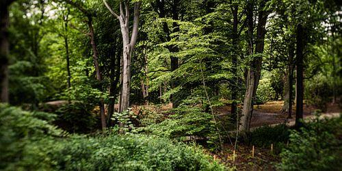Natuurfoto van een Hollands park met oude bomen en slootjes
