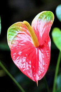 Rode plant von Michiel piet