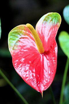 Rode plant van Michiel piet