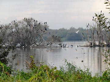 Plas met vogels van Pieter Korstanje