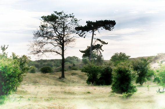 Vue arborescente