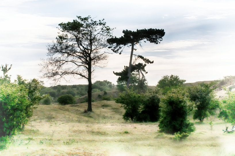 Vue arborescente sur Erik Reijnders