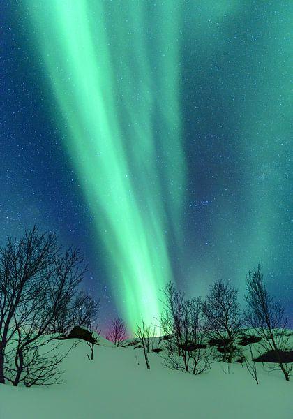 Noorderlicht in de winternacht op de Lofoten in Noord Noorwegen van Sjoerd van der Wal
