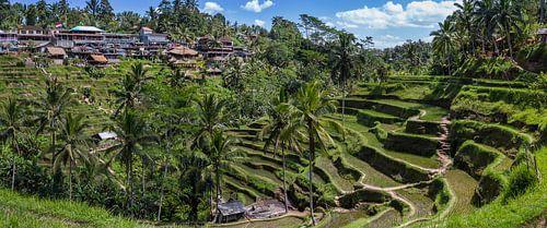 Rijst velden van Bali, Indonesie.