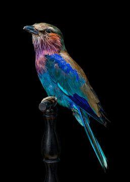 Singvogel von Marielle Leenders