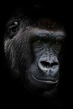 Junger erwachsener Gorilla, männlich von Ron Meijer Photo-Art