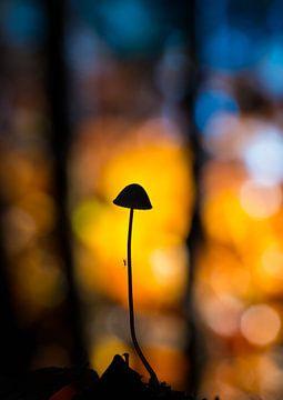 paddenstoel in silhouet sur Berend-Jan Bel