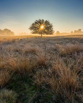 Strabrechtse Heide 277 von Deshamer