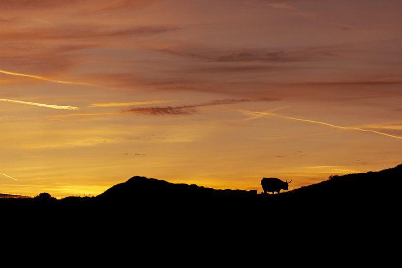 Silhouet Schotse Hooglander op Texel van Oog in Oog Fotografie