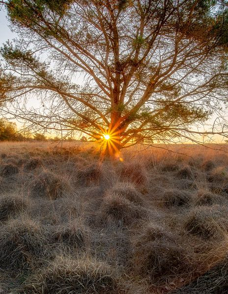 Sunrise of a new day van René Vierhuis