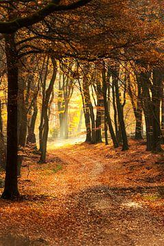 Sentier à travers une forêt brumeuse lors d'une belle matinée d'automne brumeuse sur Sjoerd van der Wal