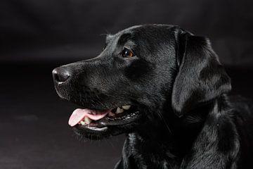 Zwarte hond, Labrador Retriever von Hennnie Keeris
